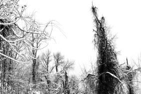 Snow Path #8