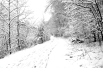 Snow Path #1