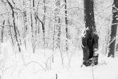 Snow Path #7