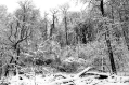 Snow Path #2
