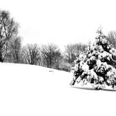Snow Path #5