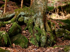 Tree and Roots #1